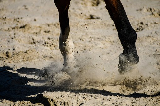 Horse, Sand, Close Up, Horseback Riding, Equestrian