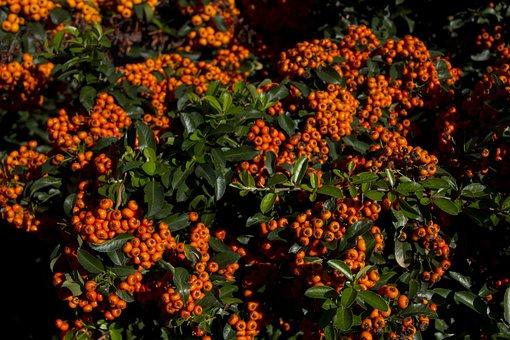 Hungary, Plant, Nature, Summer, Sunshine