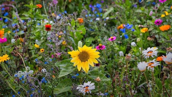 Wild Flowers, Sunflower, Flower Meadow, Wildflowers