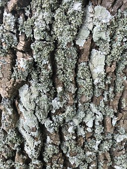 Bark, Tree, Wood, Nature, Trunk, Structure, Pattern