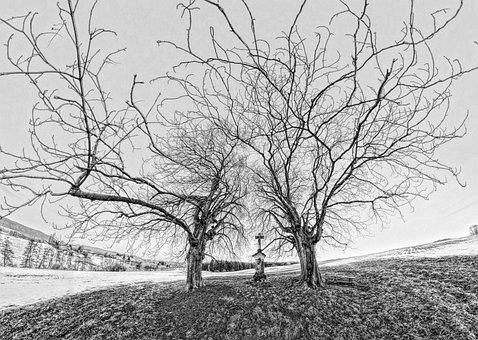 Tree, Winter, Nature, Cold, Twilight, Frozen, Fog