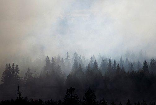 Trees, Smoke, Wood, Nature, Landscape, Forest, Burning