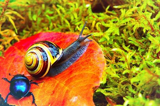 Wstężyk Huntsman, Molluscs, Leaf, Moss, Autumn