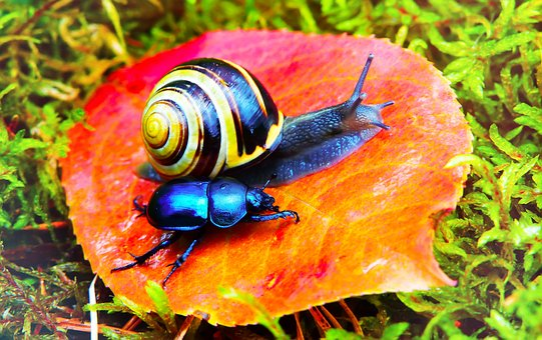 Wstężyk Huntsman, Molluscs, Forest Beetle, The Beetles