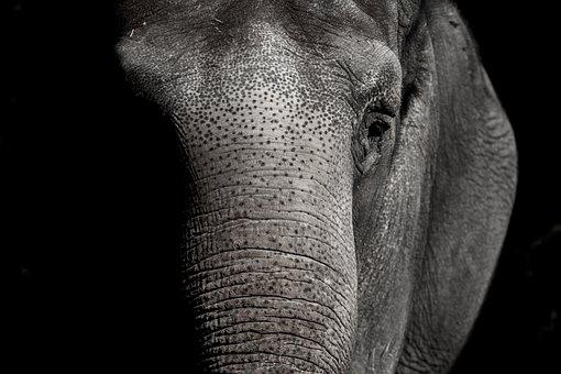 Elephant, Zoo, Animal, Animal World, Pachyderm