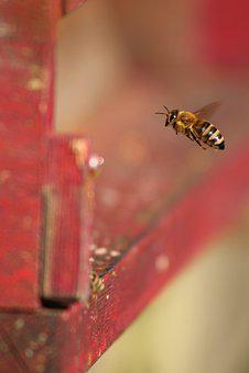 Bee, Prey, Beekeeper, Beehive, Insect, Hobby