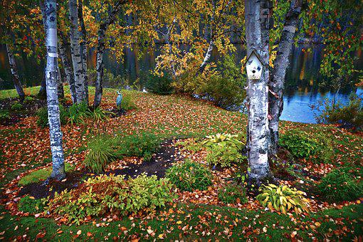 Landscape, Fall, Nature, Leaves, Trees, Birch, Forest