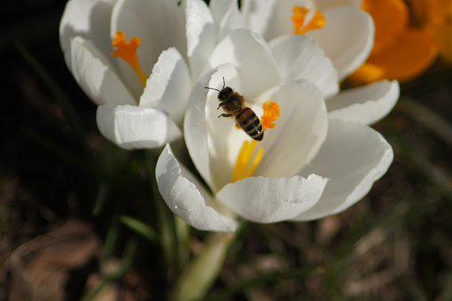 Blossom, Bloom, Bee, Insect, Pollen, Close Up