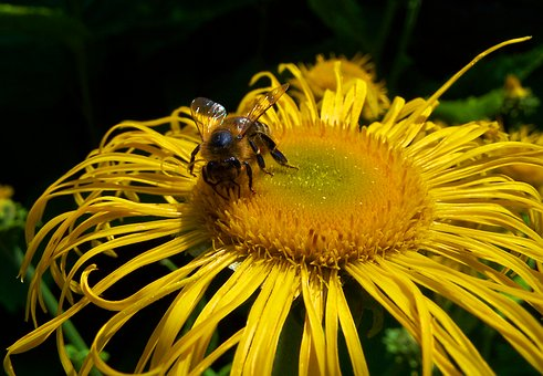 Blossom, Bloom, Yellow, Bee, Close Up, Nature