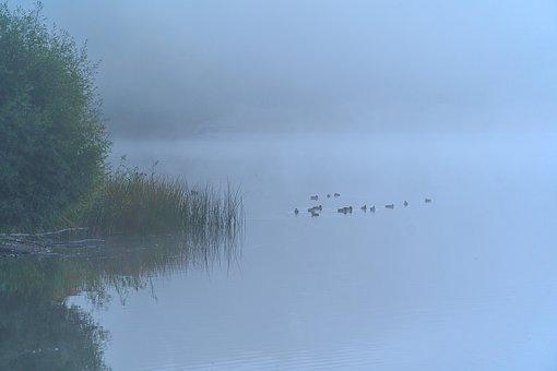 Nature, Fog, Autumn, Mourning, Sad, Depressed