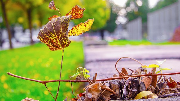 Leaves, Fall, Autumn, Nature, Colorful, Emerge, Wood