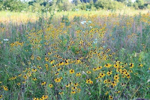 Field, Wildflower, Summer, Meadow, Flowers, Plants