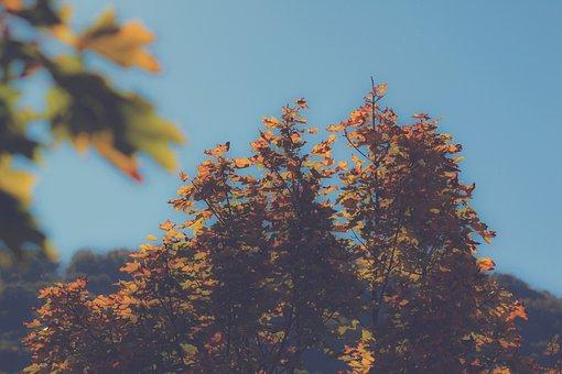 Autumn, Trees, Leaves, Nature, Forest, Landscape