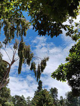 Blue Clear Sky, Ooty, India
