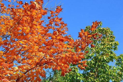 Autumn, Trees, Leaves, Landscape, Sunbeam, Coloring