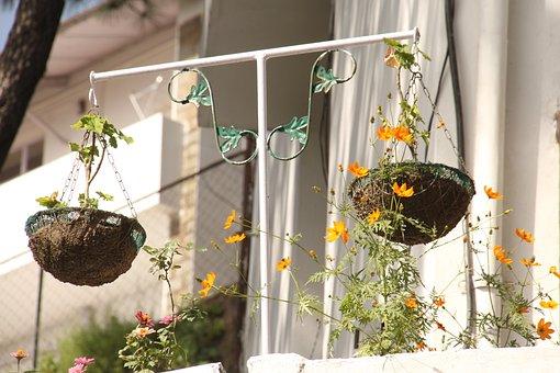 Pot, Two Pot, Flower, Lifeline, Young