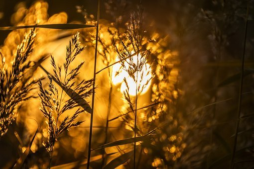 Nature, Sunset, Landscape, Light, Backlighting, Reed