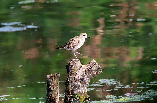 Wild, Wildlife, Shore, Bird, Migratory, Wetland, Water