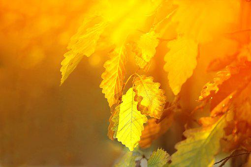 Oak, Leaves, Yellow, The Blurred, Gold, Sun, Light