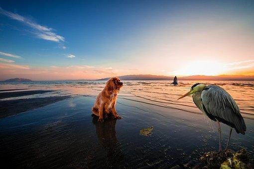 Evening, Sea, Sunset, Dusk, Peaceful, Beach