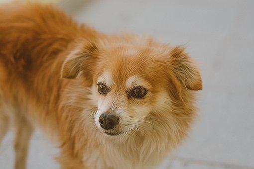Dog, Cão, Cachorro, Cahoro, Estimação, Animal, Pet