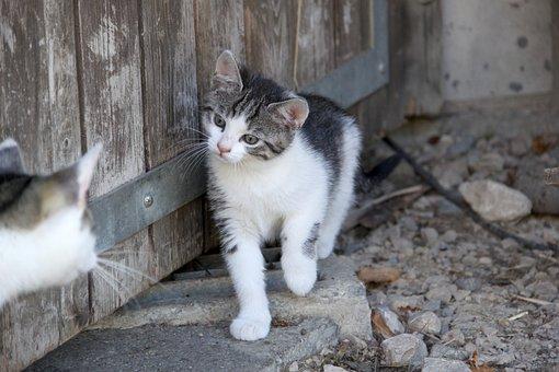 Cat, Kitten, Play, Furry, Animal