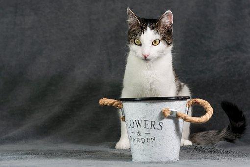 Animal, Pet, Cat, Domestic Cat, Apartment Cat, Portrait