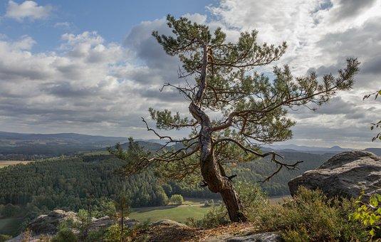 Bastei, Pine, Saxony, Germany, Landscape, Nature, Rock