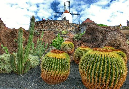 Spain, Lanzarote, Jardin De Cactus, Cactus, Nature