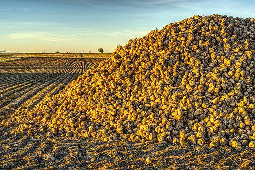 Sugar Beet, Harvest, Harvested, Pile, Stacked, Hill