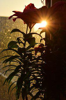Window, Flower, Sunrise, City, Sun