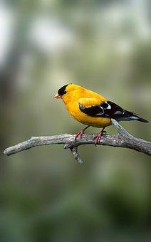 Bird, Bulbul, Tree, Branch, Summer, Beak, Wings, Pet