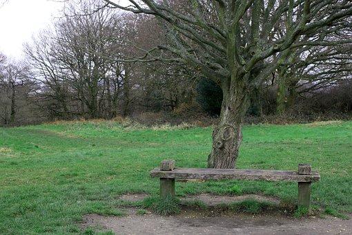 Tree, Bench, Nature, Park, Landscape, Rest, Trees, Seat