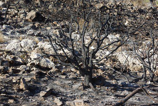 Shrub, Tree, Burned, Calcined, Trunk, Fire, Ash, Death
