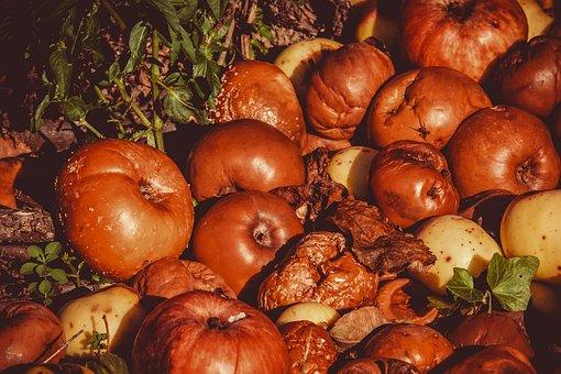 Apple, Windfall, Fruits, Lazy, Fruit, Kernobstgewaechs
