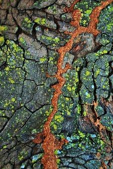 Tree, Trunk, Bark, Lichen, Moss, Crevice, Soil, Red