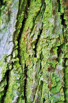 Tree Bark, Bark, Trunk, Tree, Rough, Textured, Cracks