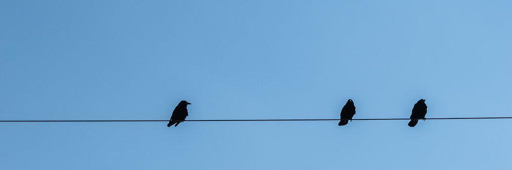 Stare, Power Line, Birds, Persevere, Animal, Black