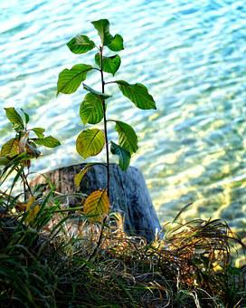 Plant, Tree, Engine, Young, Growth, Live, Nature