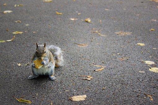 Park, London, Gita, England, Gardens, Squirrel, Leaves