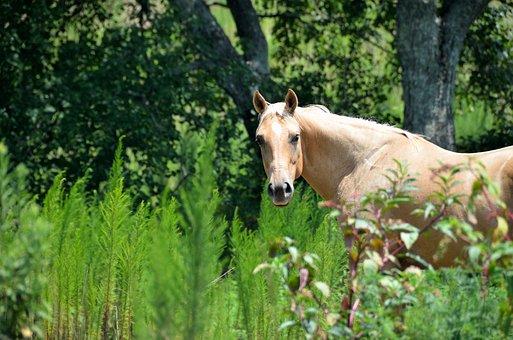 Horse, Beauty, Ranch, Nature, Animal, Stallion, Farm