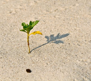 Sprout, Offshoot, Offspring, Graft, Scion, Beach, Plant