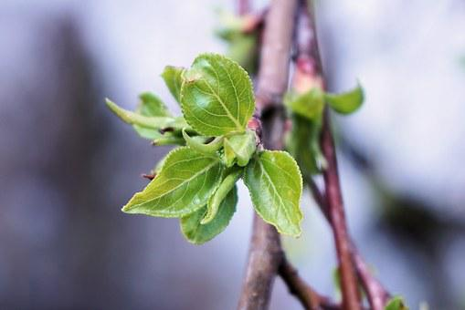 Leaf, Green, Spring, Bud, Frisch, New, Green Leaf
