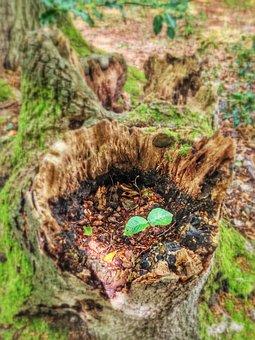Green, Tree Stump, Scion, Dawn, Spring, New Beginning