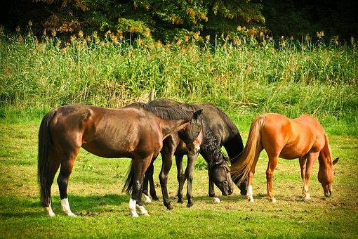 Horses, Animal, Nature, Ride, Farm, Wildlife, Pasture