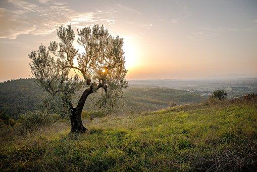 Landscape, Tree, Sunset, Naturaorizzontale, Landscaping