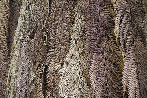 Leaves, Nature, New Zealand, Weaving, Pattern, New