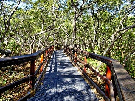 Walkway, Trail, Wooden, Pathway, Walk, Path, Hiking