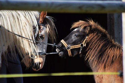Horse, Pony, Playing, Farm, Equestrian, Play, Ranch