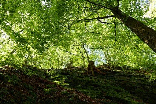 Dragon Gorge, Rock, Moss, Moisture, Eisenach, Rennsteig